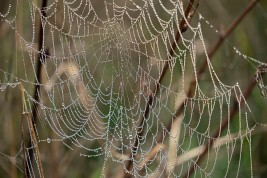 Web With Dew - Larry Citra