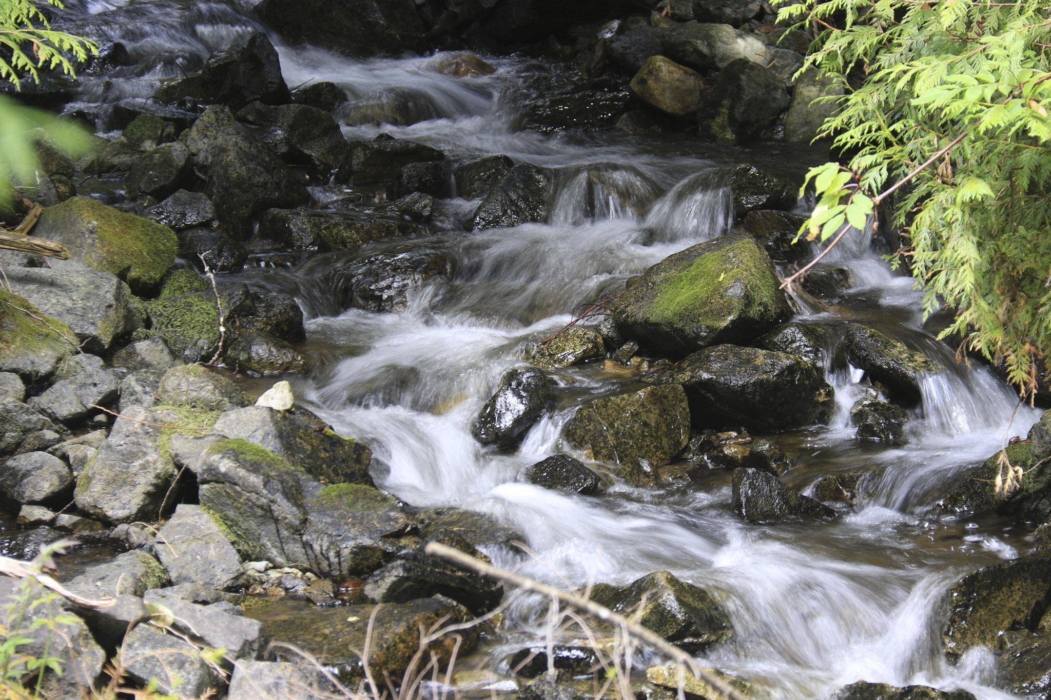 Eakin Creek Tributary - Doug Boyce