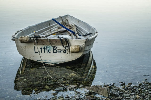 Little Bird © Larry Citra