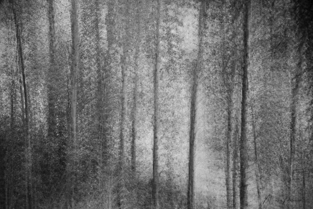 Impressions of a Misty Morning - Monika Paterson