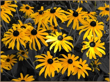 Yellow Flowers-Marilyn Niemiec