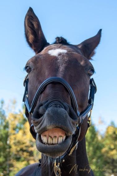 Your want me to smile.. ok - Monika Paterson