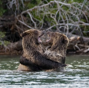 A Big Bear Hug - DMHopp