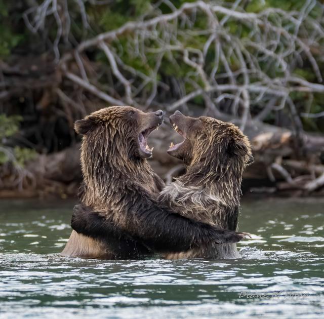 A Big Bear Hug - DMHopp