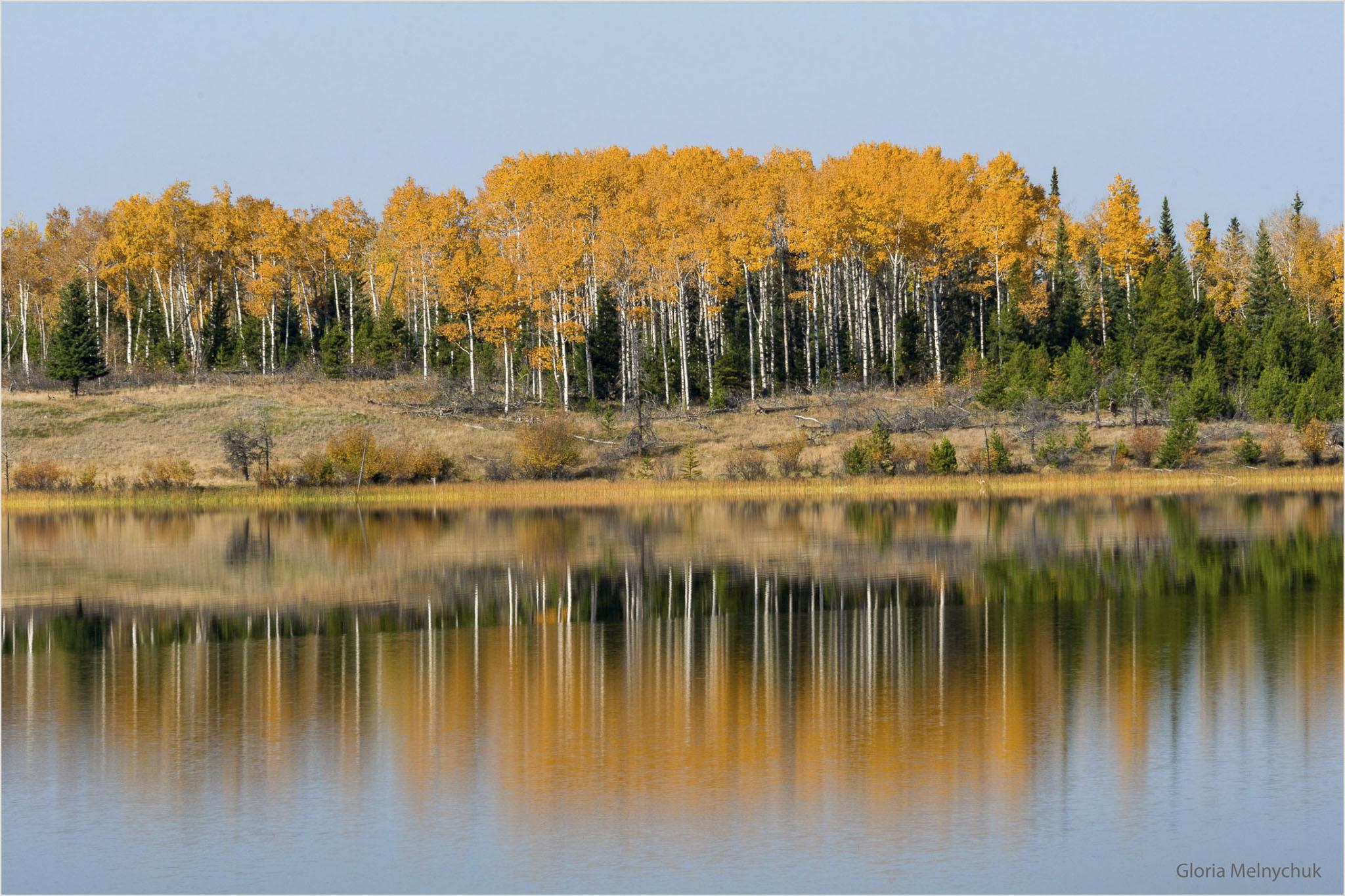 Fall Reflections 3042 - Gloria Melnychuk