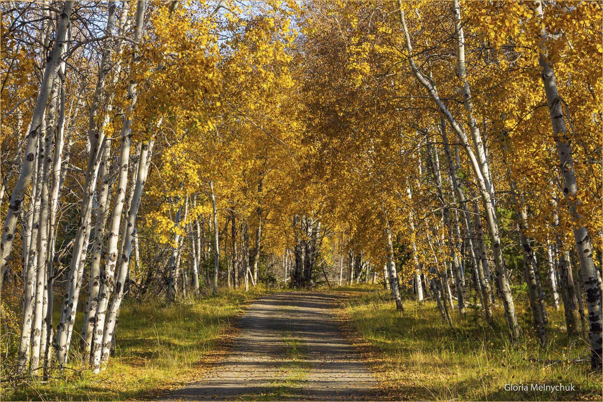 Golden Trail 4937 - Gloria Melnychuk