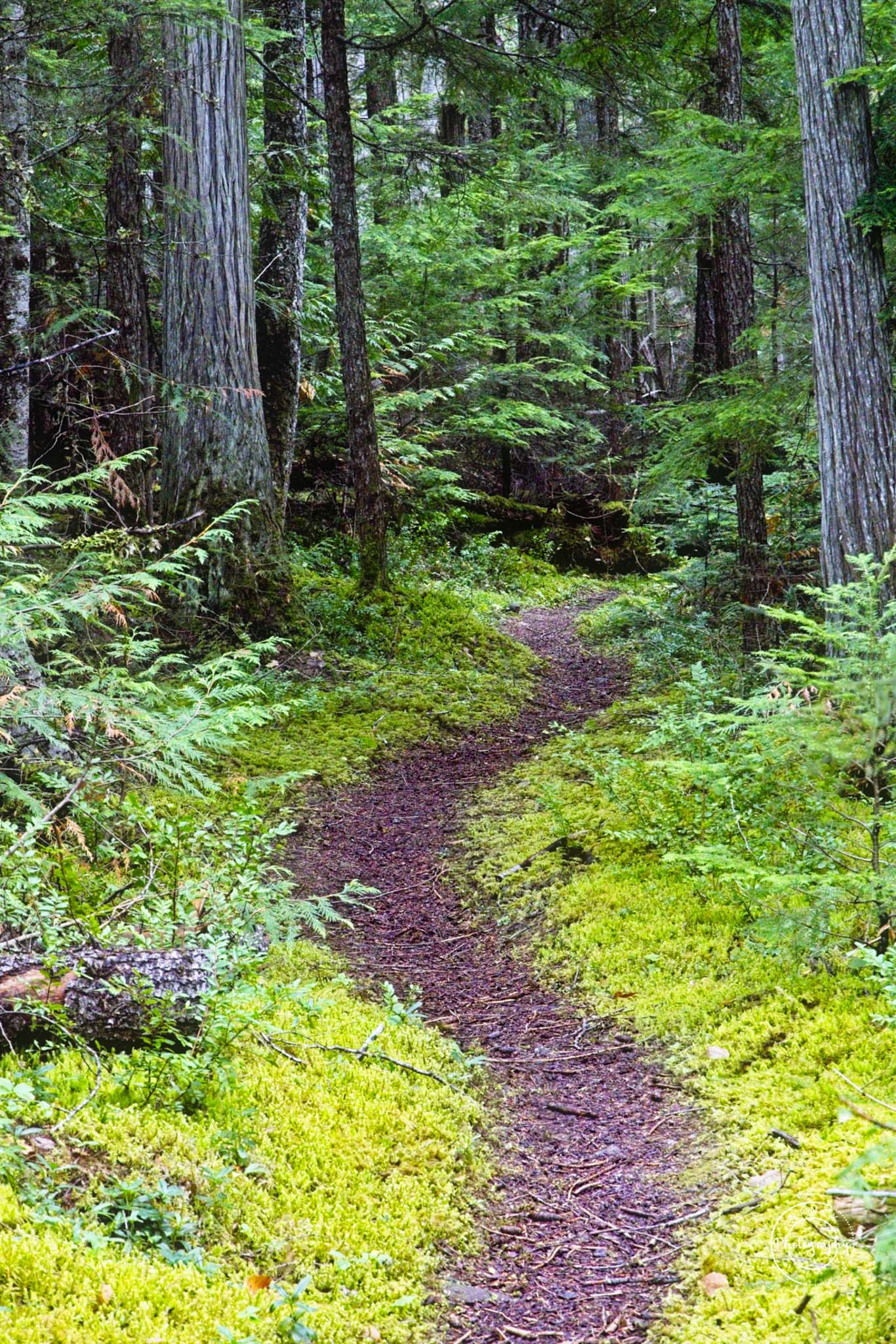 path to placid lake - Nancy Cunningham
