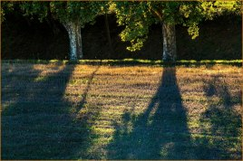 Plane Trees at Sunset, Provence, France © Larry Citra