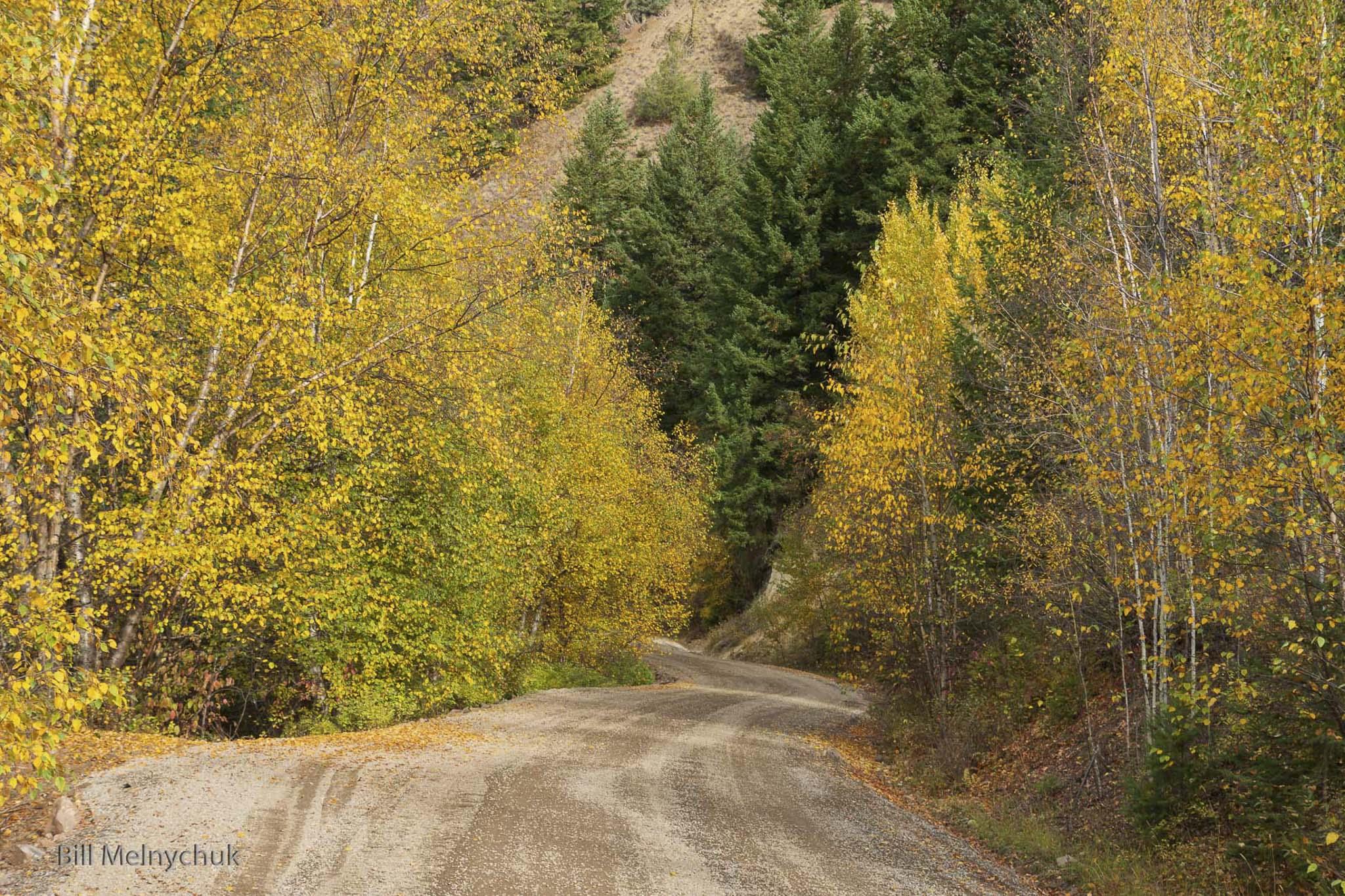 Road to Gold 5128 - Bill Melnychuk.jpg