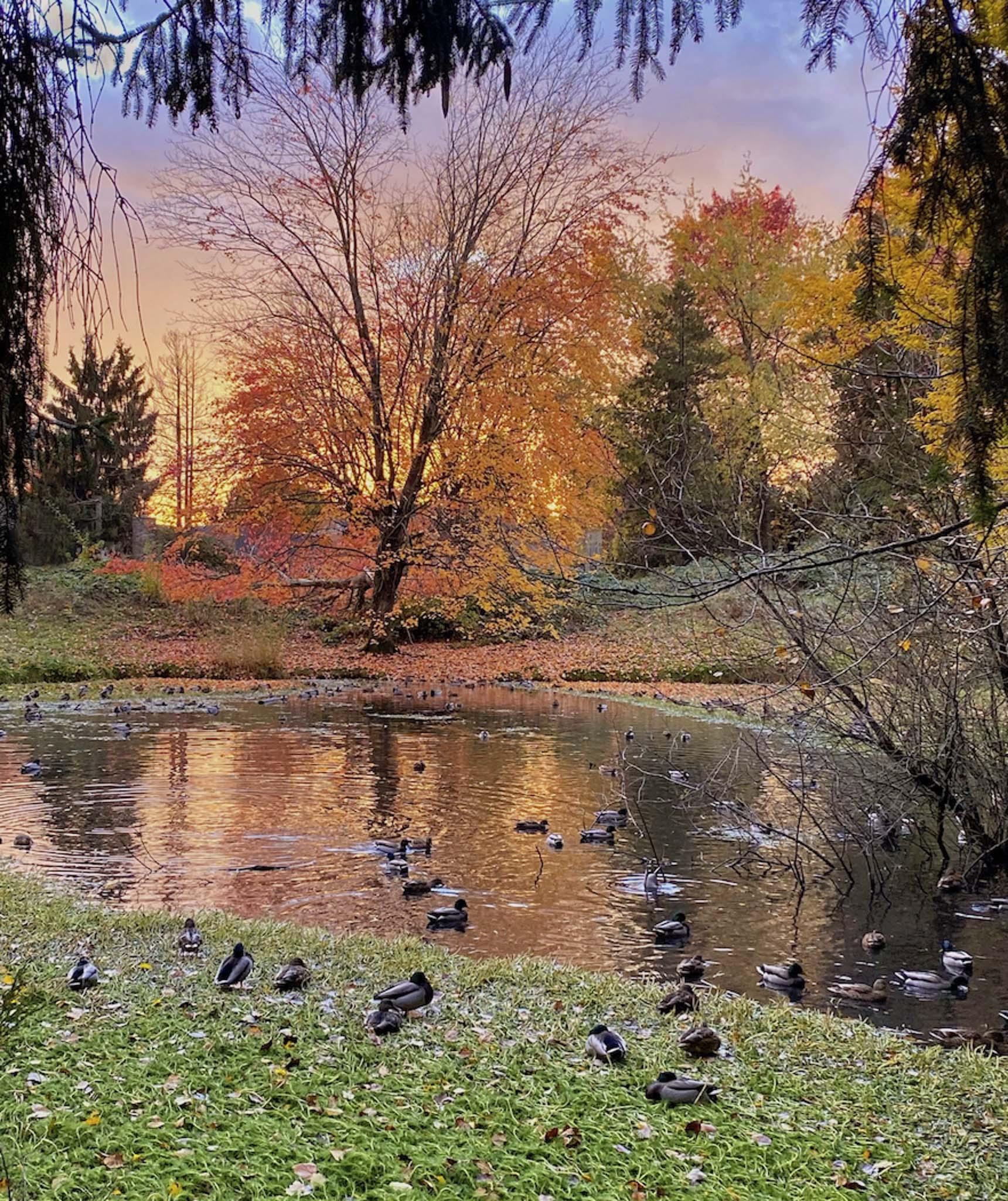 CarolJJ-The Duck Pond