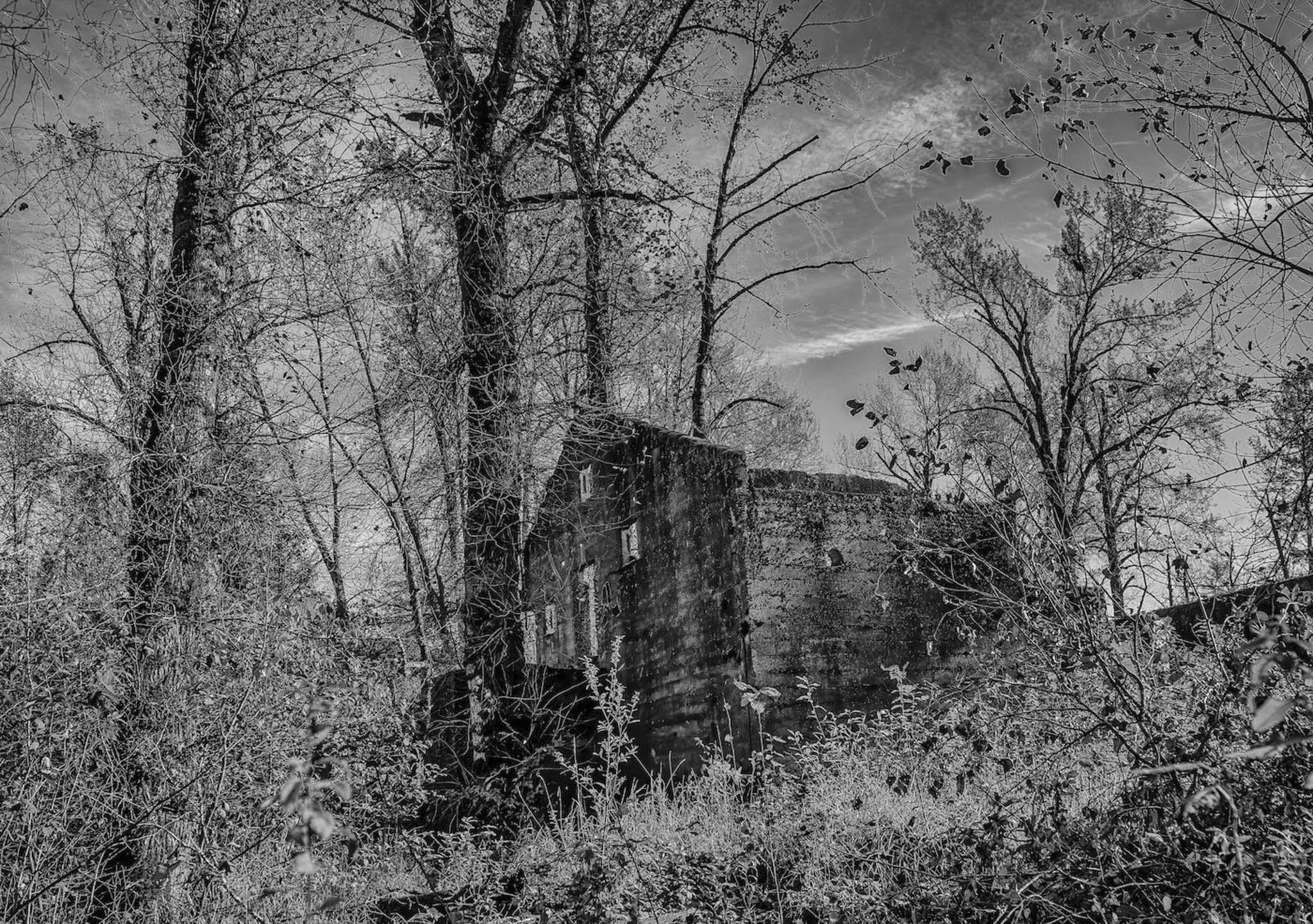 Nature Is Winning - Carol Jackson