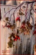 Ice Sculpture - Diane Sullivan
