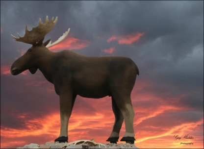 Gary Hardaker- Mac the Moose- under a Prairie Sky