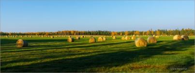 Morning and a hundred bales of Hay © Gloria Melnychuk