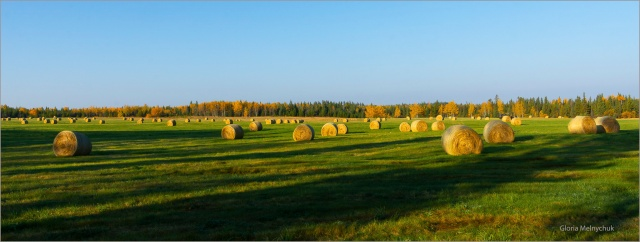 Morning and a hundred bales of Hay © Gloria Melnychuk