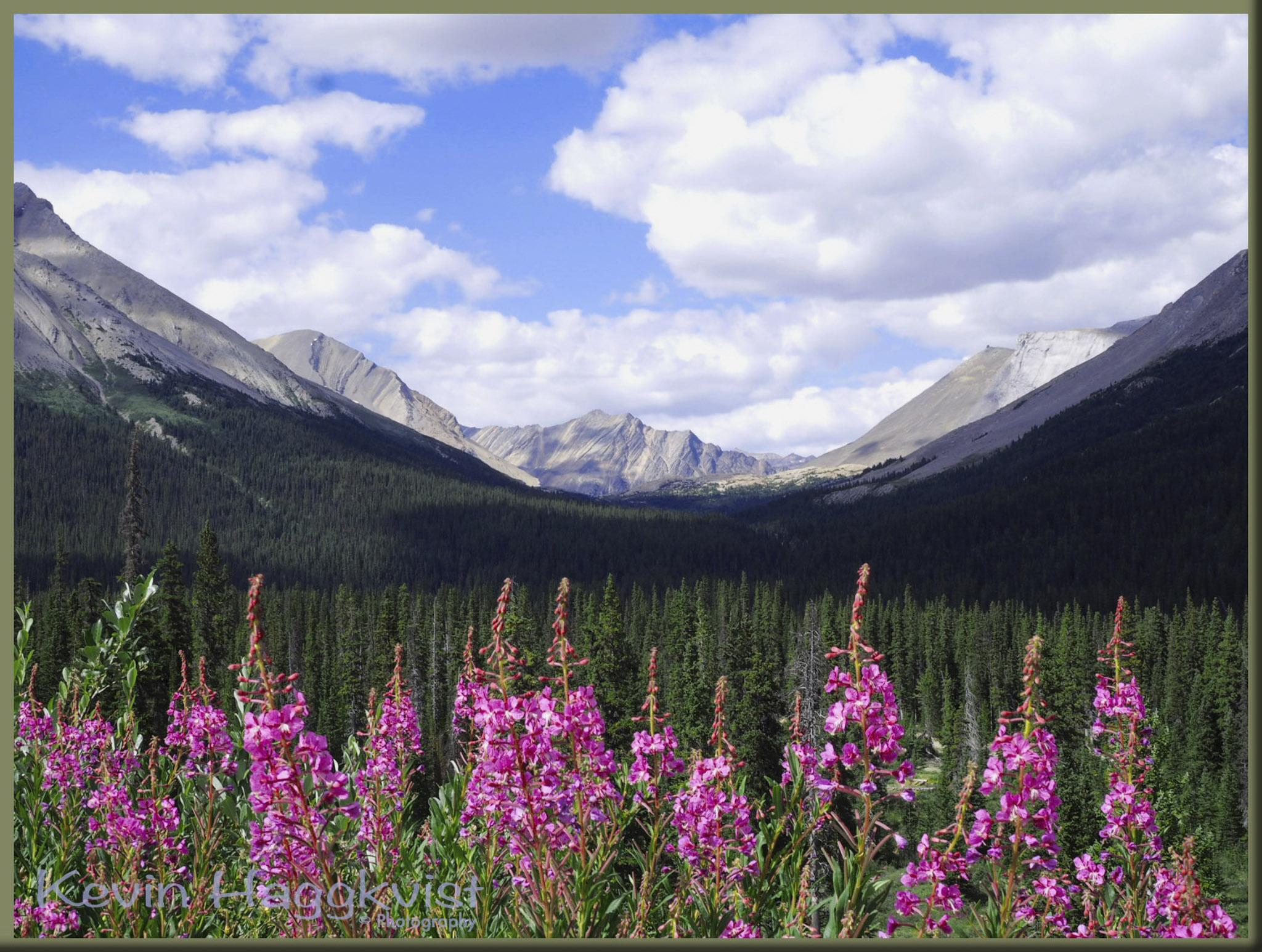 Mountain View - Kevin Haggkvist