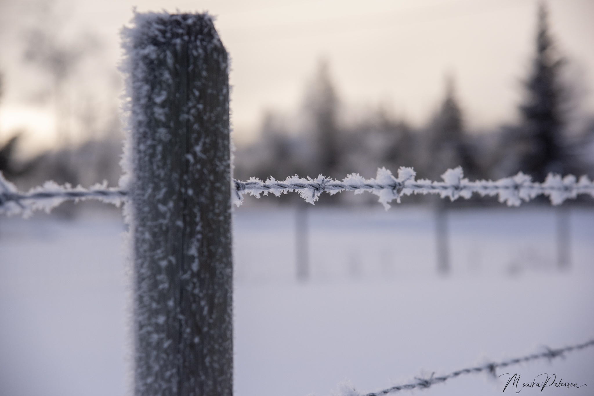 Hoarfrost on Barbed Wire - Monika Paterson