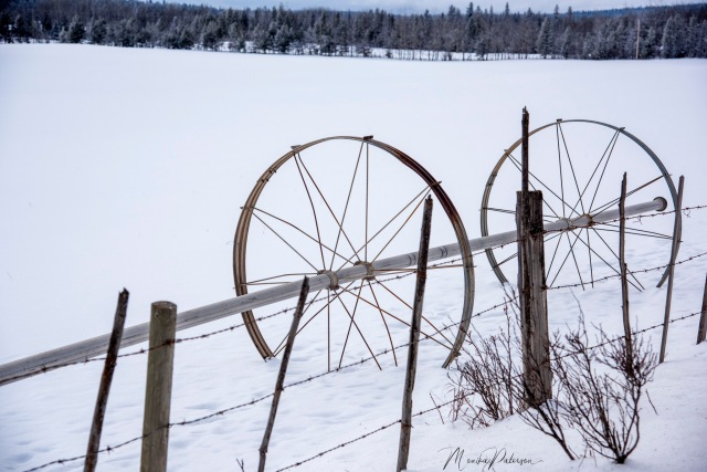 Field Sprinkler Wheels in the Snow - Monika Paterson