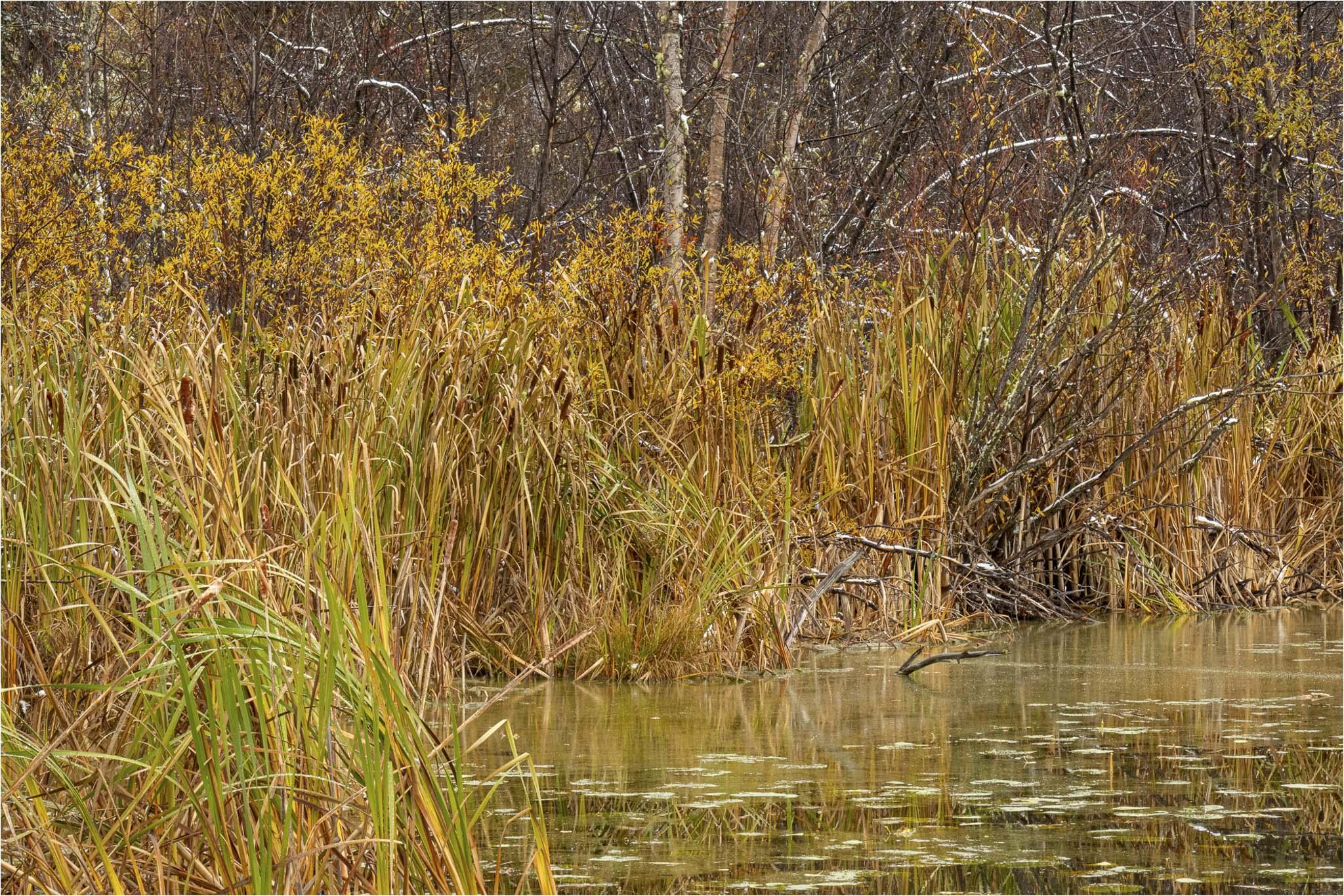Autumn at the Lake - © Sharon Jensen