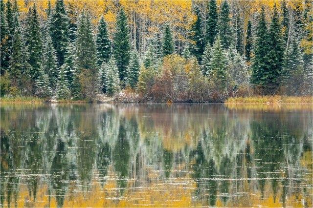 Colourful Autumn Reflections on Ice-Webb Lake - © Sharon Jensen