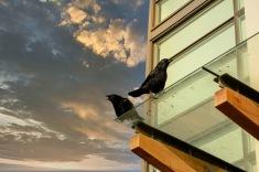 2 Crows - Carol Jackson