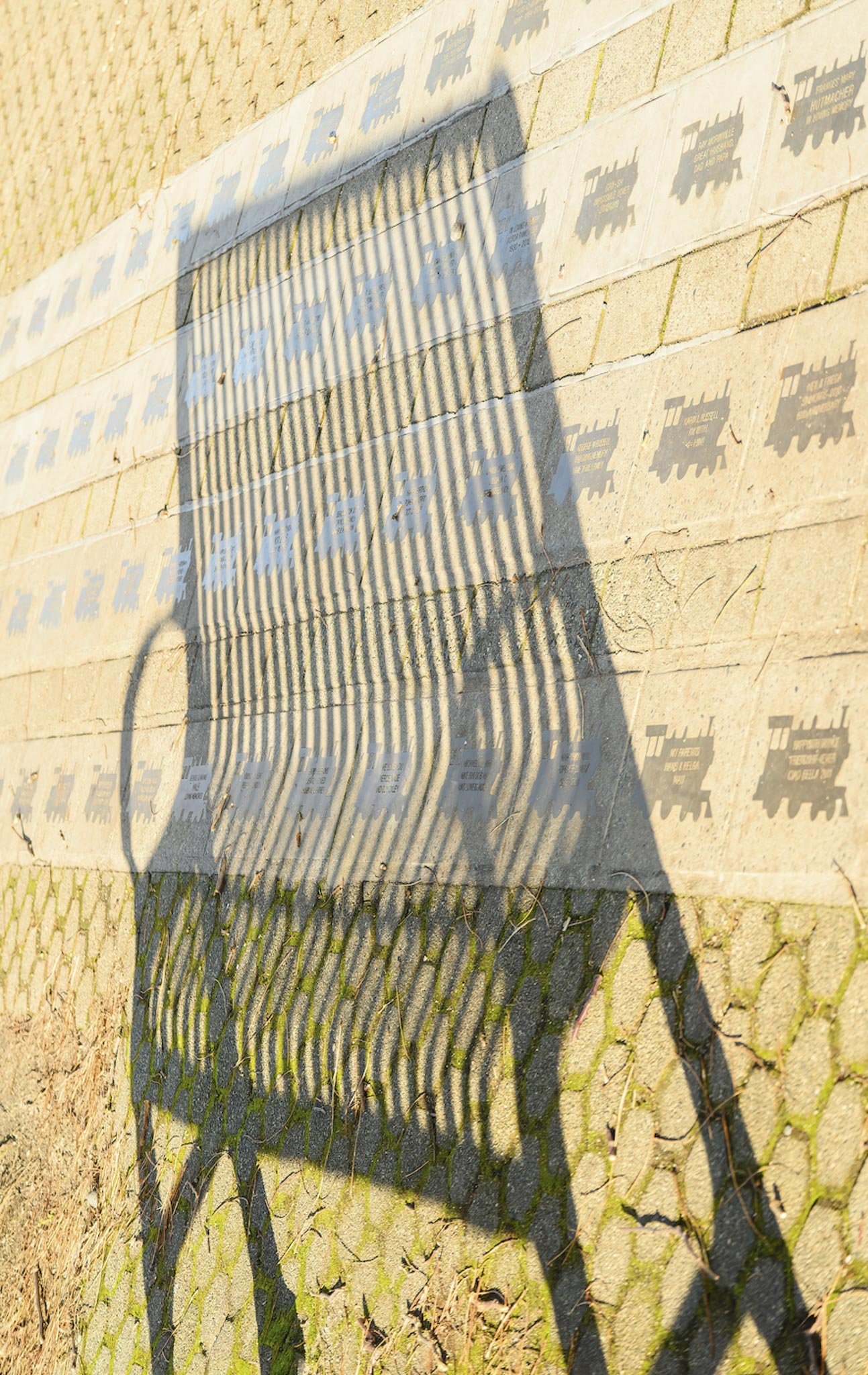 Shadow Bench - Carol Jackson