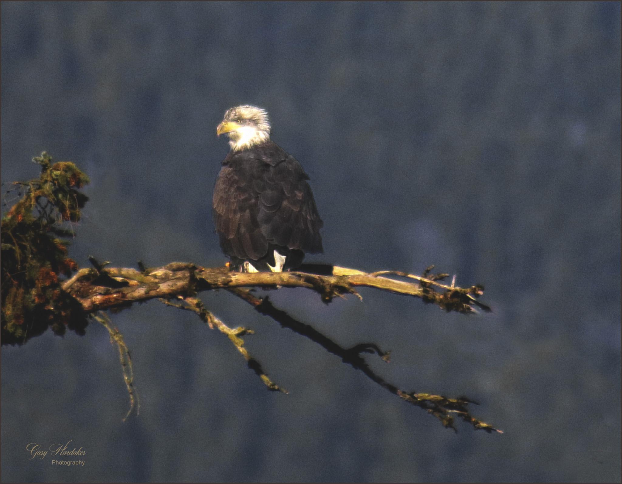Gary Hardaker-Eaglet at Harrison River