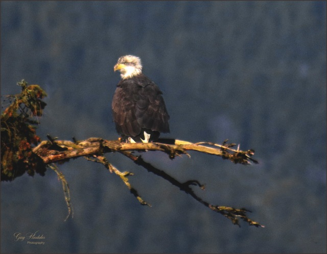 Gary Hardaker-Eaglet at Harrison River