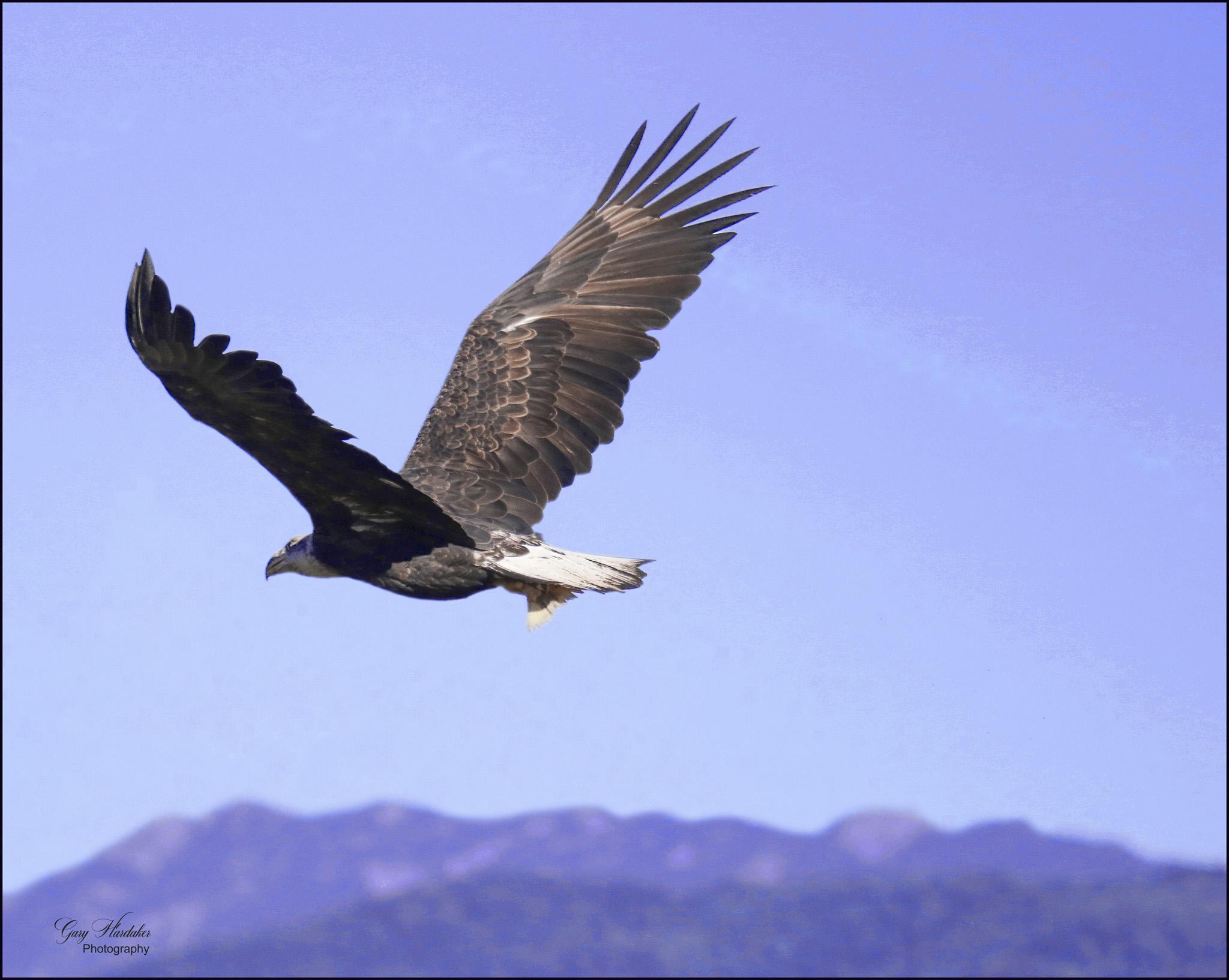 Gary Hardaker- Where Eagles Soar