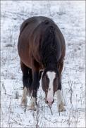 Gloria Melnychuk - Seek and Ye Shall Find - Feral Horses
