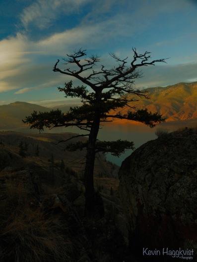 Shadow Tree