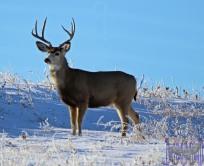 Doug Boyce - One Buck @ Wheatland County