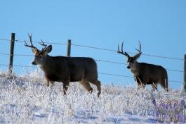 Doug Boyce - Two Bucks @ Wheatland County