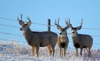 Doug Boyce - Three Bucks @ Wheatland County