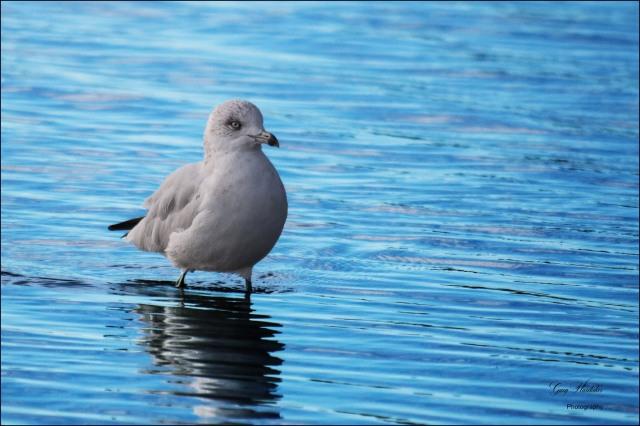 Gary Hardaker-Coming ashore (Gull Lake Alberta)