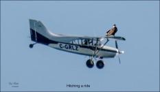 Gary Hardaker-Hitching a ride