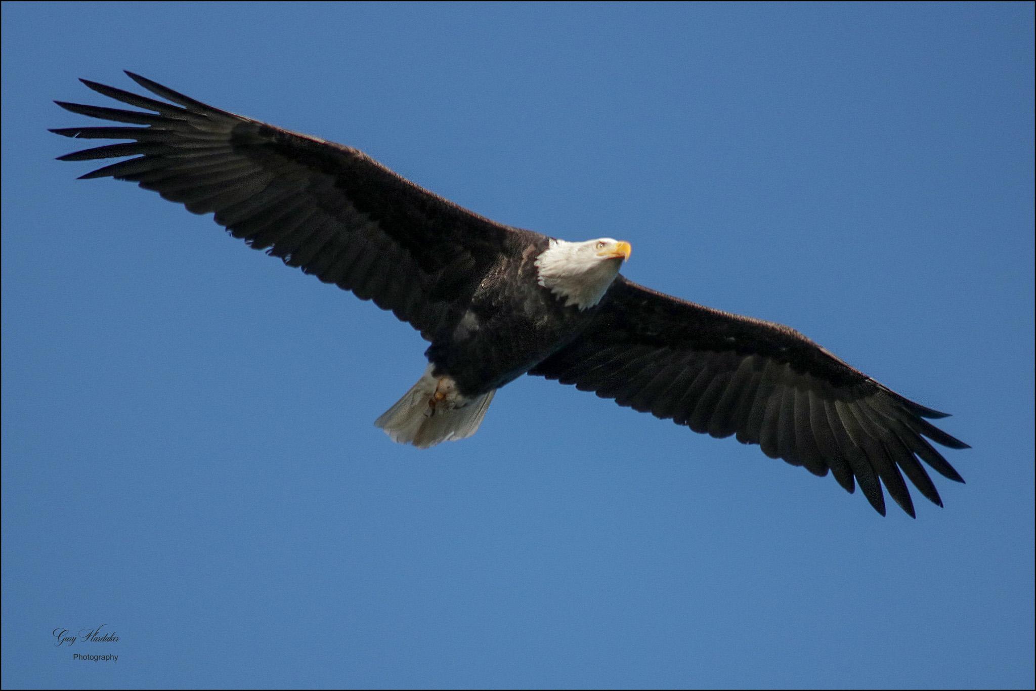 Gary Hardaker-Soar like an Eagle
