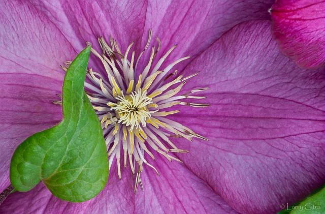 Larry Citra © Garden Blossom