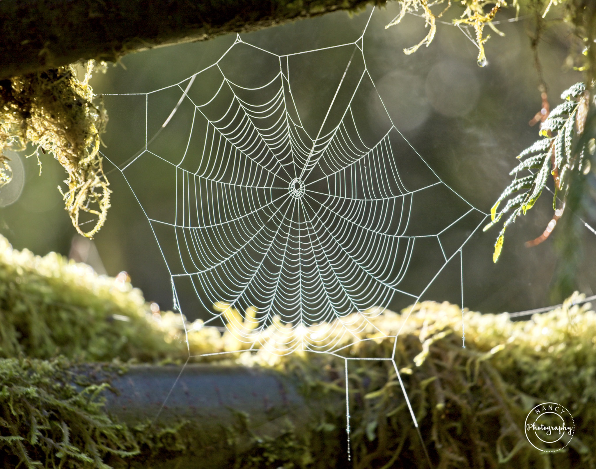 Nancy Cunningham  Web in the woods