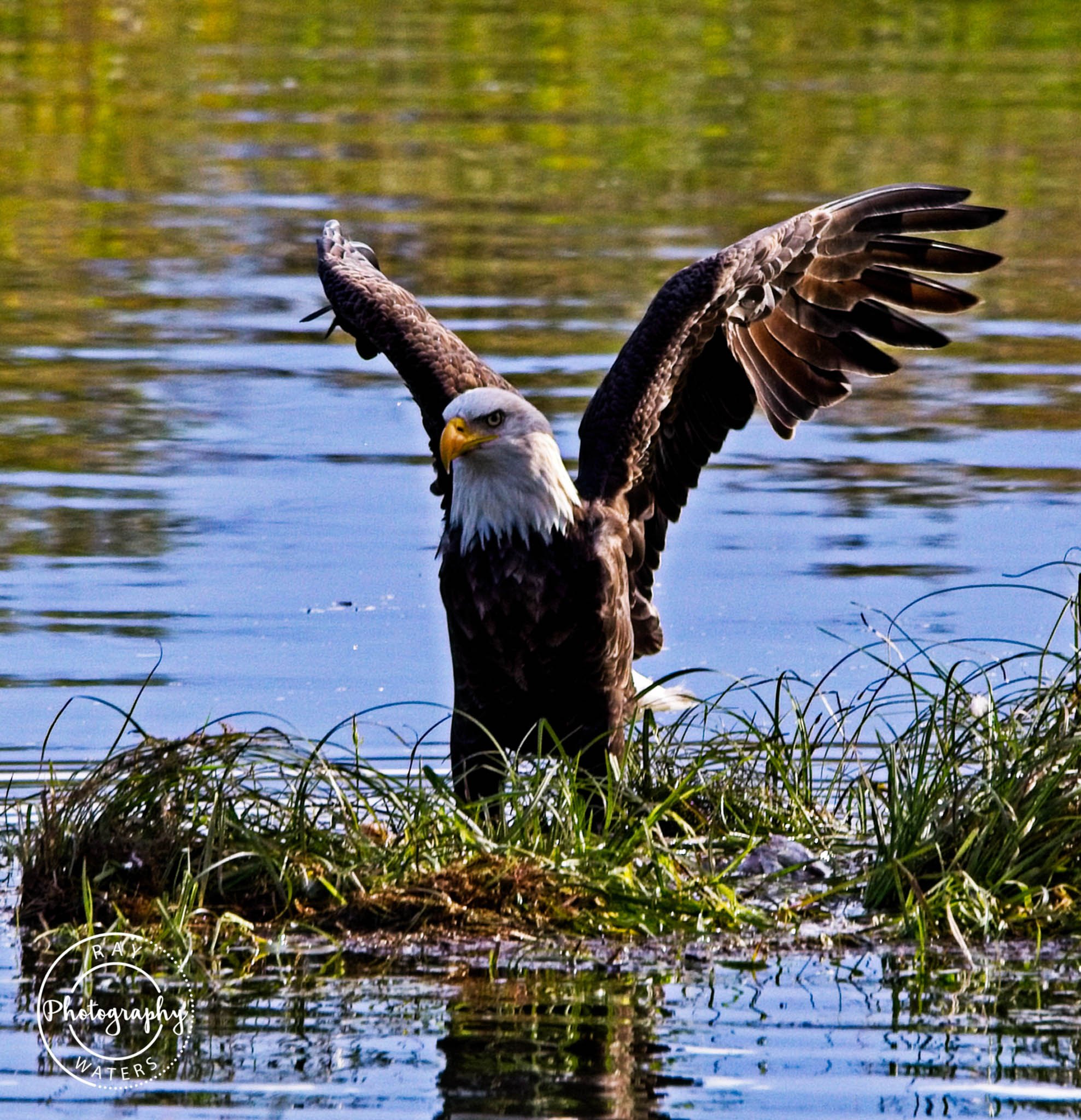 Ray Waters Eagle take off