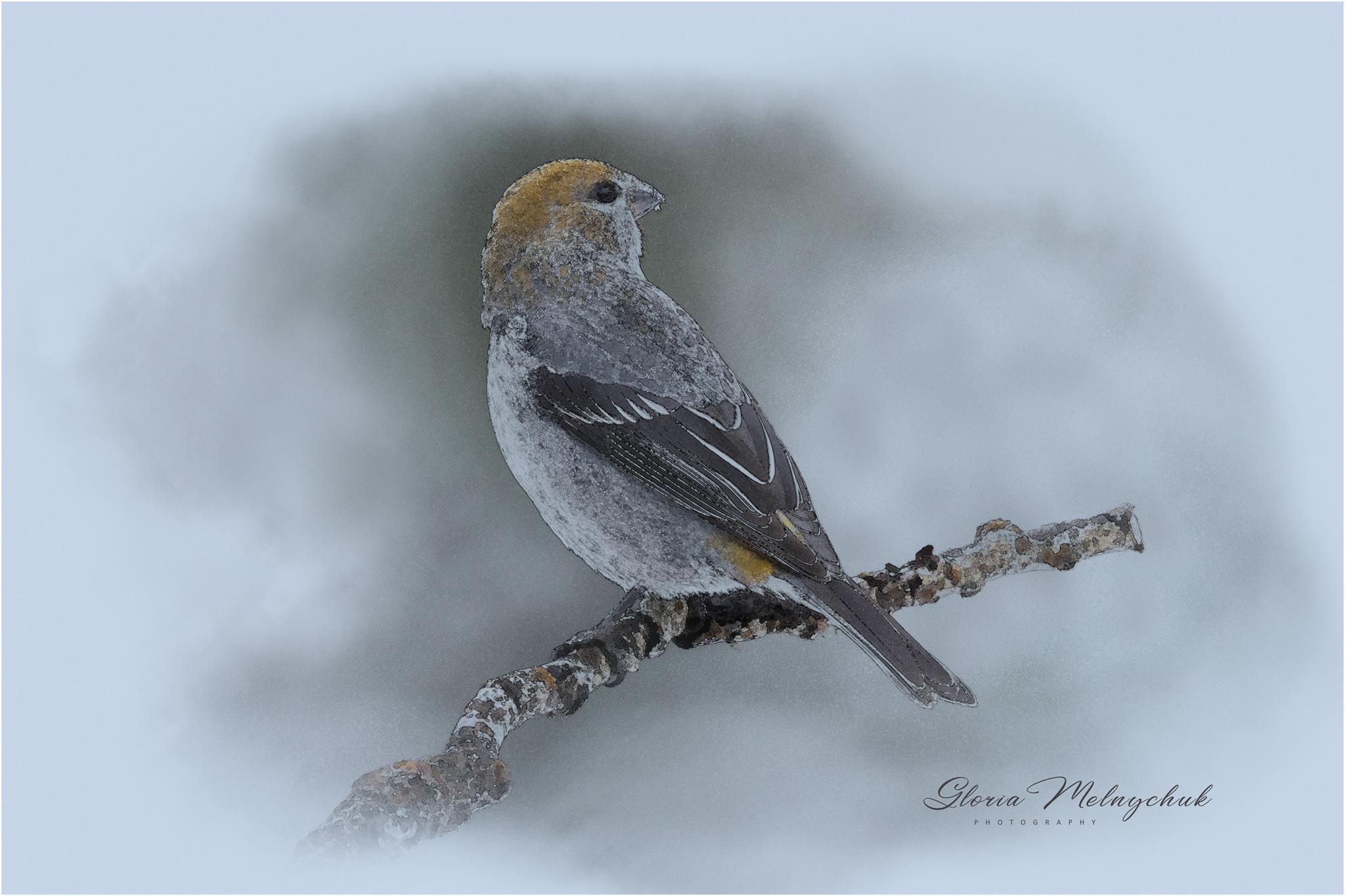 Pine Grosbeak Watercolor © Gloria Melnychuk