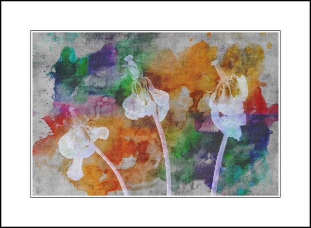 Sharon Jensen © Tulip Trio-Watercolour Effect