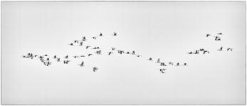 Sandhill Cranes in Flight - Minimalism - Diane Hopp