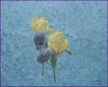 Gary Hardaker- Visions of Spring (through a frosted pane)c