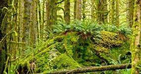 Nancy Cunningham - Lower Falls Trail