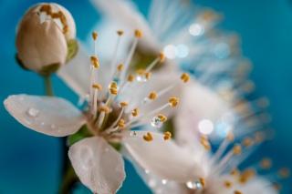 DonnaMarshall - Burgeoning Blossoms 1956