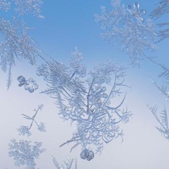 Donna Marshall - Ice Flowers
