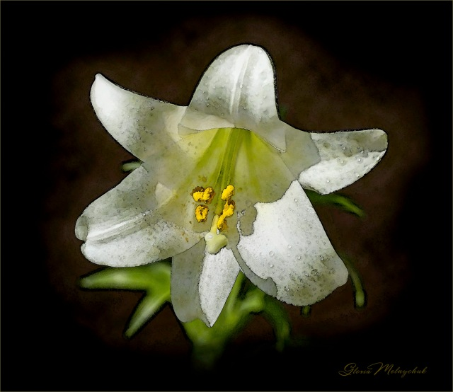 Easter Lily Digital Painting ©Gloria Melnychuk