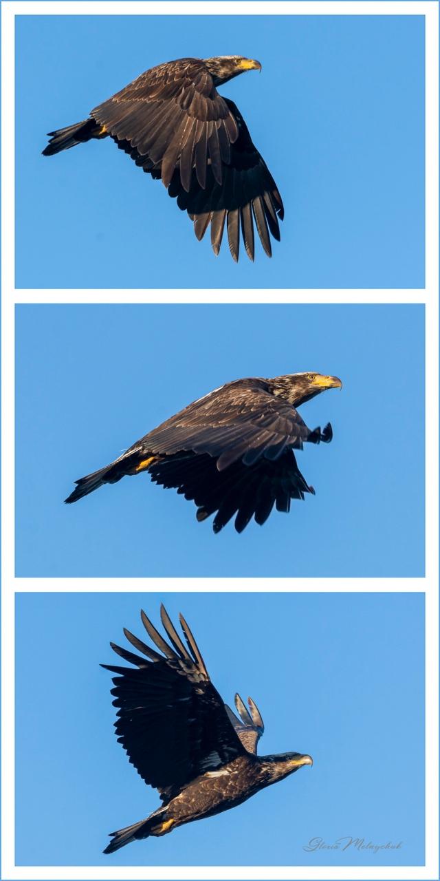 Lift Your Wings ©Gloria Melnychuk