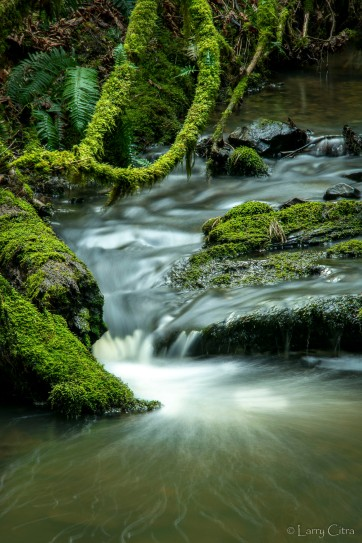 Larry Citra © Cusheon Creek